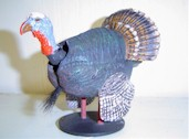 Bobble Turkey